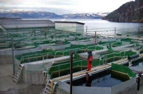 Illustrasjon av landanlegg. © Foto: Fiskeridirektoratet