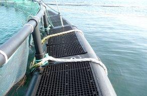 Notkrok på merd. Foto: © Fiskeridirektoratet